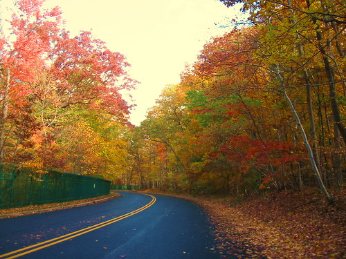 Autumn on Reservoir Road