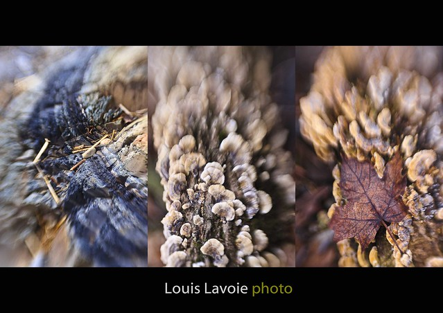 Triptyque Lensbaby