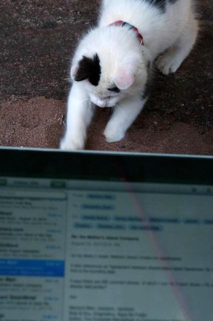 I Can Haz iPad?