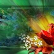 flowers wallpaper - 3d abstract hd desktop wallpapers for laptop.