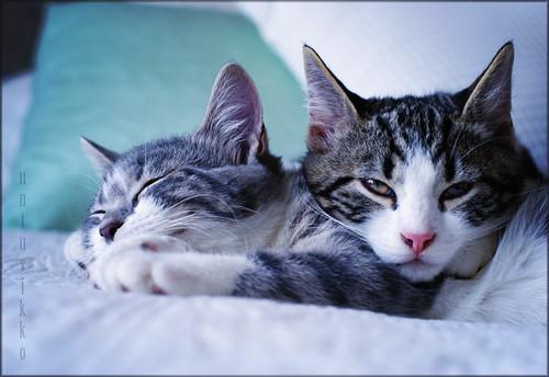 Cat spam ~ Siblings