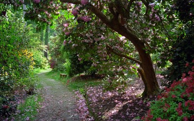 Leonardslee Gardens, Lower Beeding, West Sussex, UK | Tranquil walks through woodlands filled with flowering azaleas and rhododendrons in May (3 of 23)