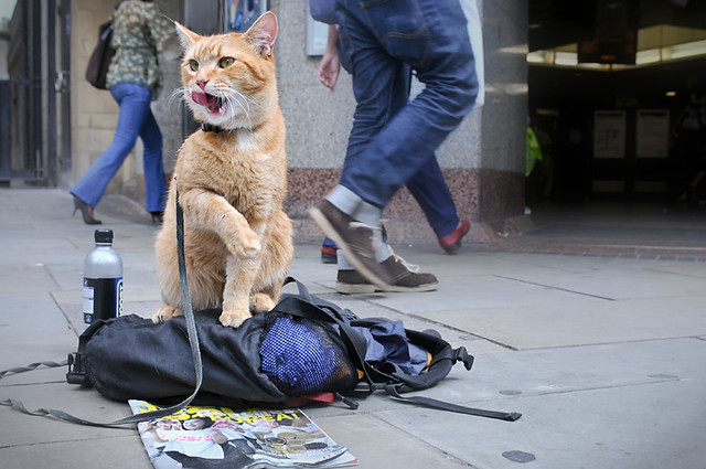 Bob the Big Issue Cat