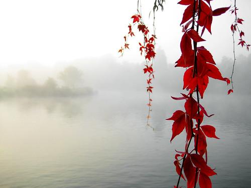 Serenity Enchanted by SirPecanGum