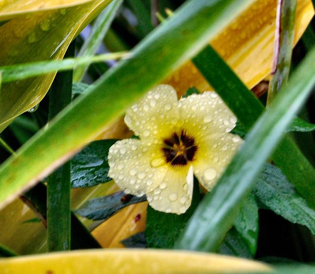 flower in grassA