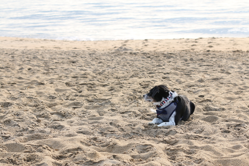 dog-beach-6