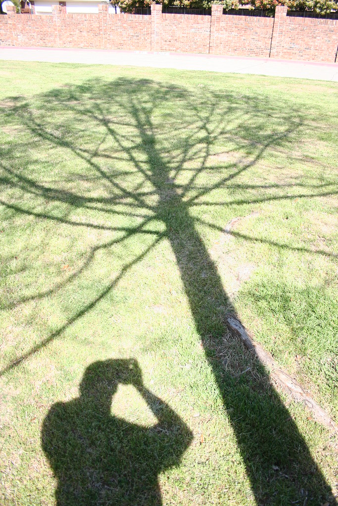 Plano, trees.