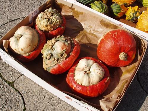 201009190049_ornamental-gourds