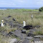 Viajefilos en La Espanola, Galapagos 048
