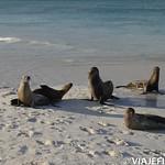 Viajefilos en La Espanola, Galapagos 094