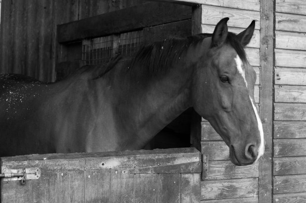 A horse in Surrey