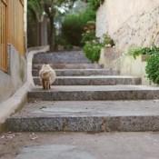 #cat #stairs #wallpaper #mallorca #summer