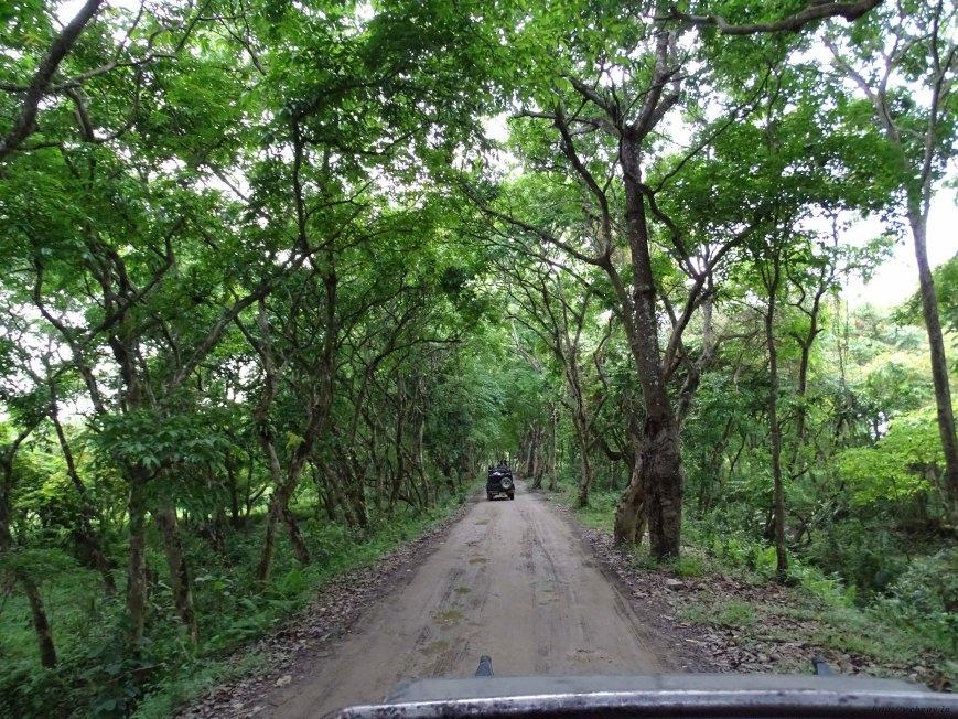 Jeep safari Inside The Kohora Range Photo, Kaziranga