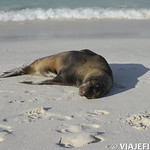 Viajefilos en La Espanola, Galapagos 084