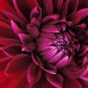 flowers wallpaper - 3d abstract image hd wallpaper picture.
