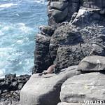 Viajefilos en La Espanola, Galapagos 042