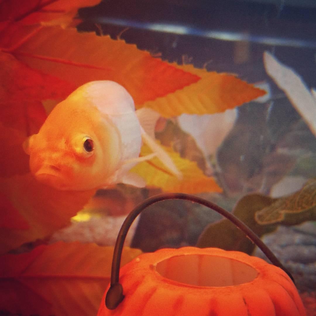 #redfish #kawasaki