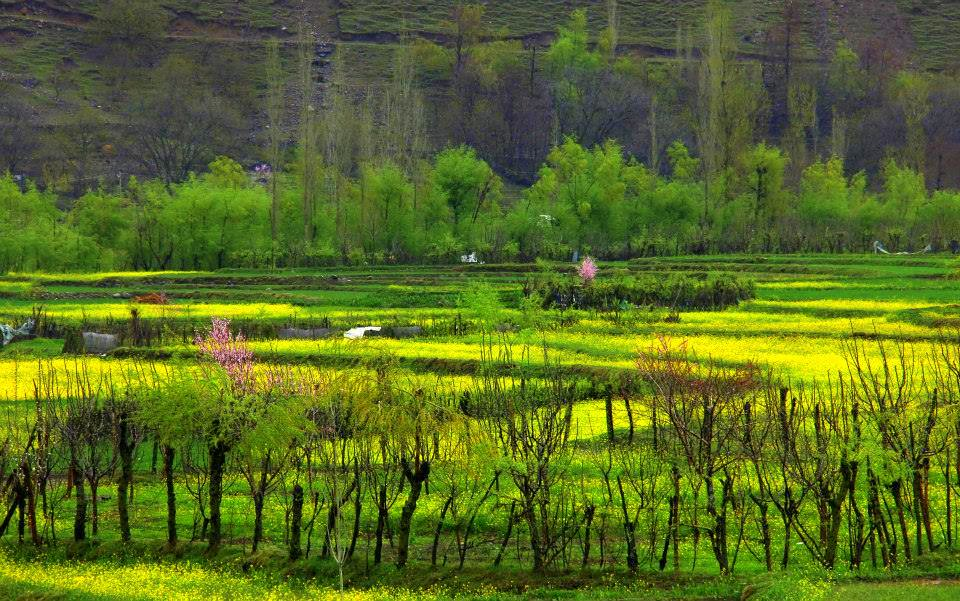 flowers bloom in kokernag spring