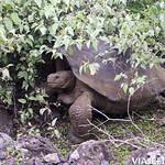 Viajefilos en San Cristobal, Galapagos 059