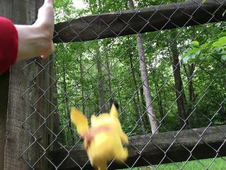 fence fall bad