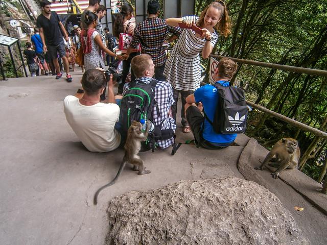 Monkey Stealing a Waterbottle