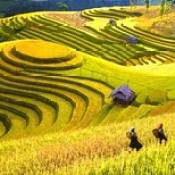 Lấy mỡ mí mắt ở Lào Cai