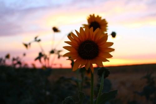 Wildflower love.