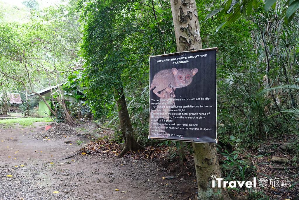 菲律宾薄荷岛眼镜猴保育中心 Tarsier Sanctuary (2)