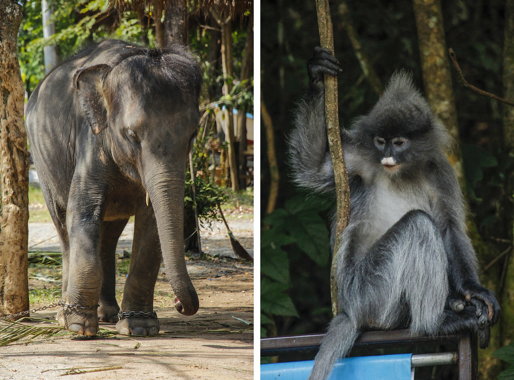 undgå dyreaktiviteter som elefantridning på dine rejser