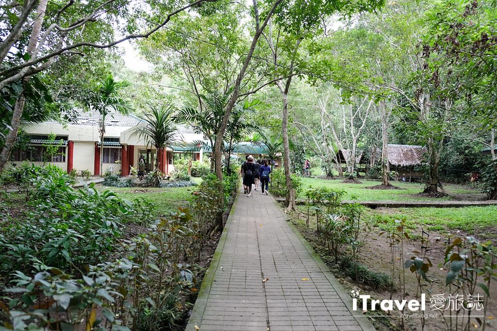菲律宾薄荷岛眼镜猴保育中心 Tarsier Sanctuary (3)