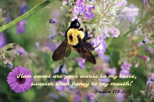 Psalm119_103(2)