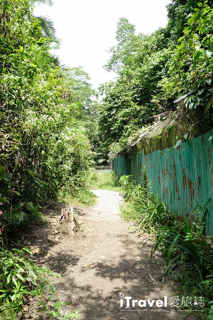 《菲律宾薄荷岛》眼镜猴保育中心 Tarsier Sanctuary:小精灵的近距离接触,颇负教育意义的亲子旅行景点。