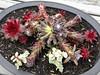 Lynn's Succulent Plantings