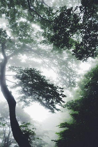 Misty forest on Mt. Tsukuba