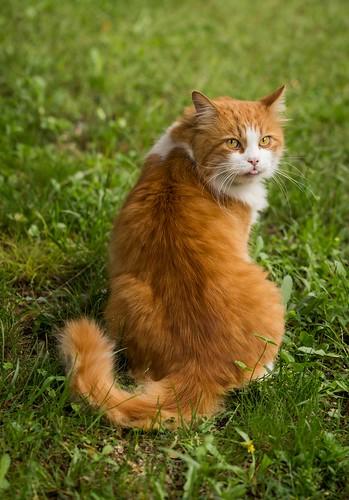 Cat-ID-1868606