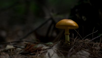Magic Mushroom.