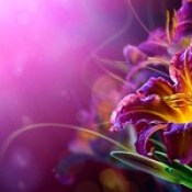 flowers wallpaper - 3d abstract free wallpaper free download.