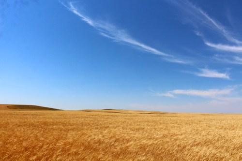 Wide open Nodak country.