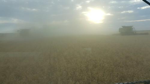 Schemper 2017 - Western Nebraska Wheat Harvest
