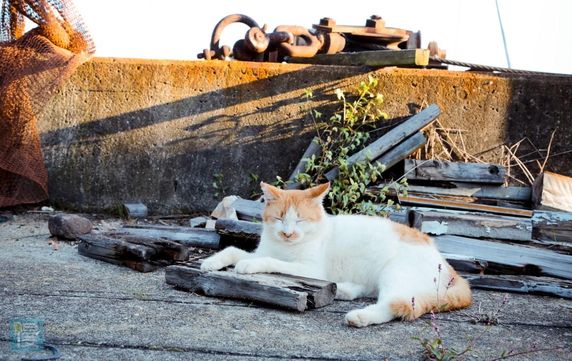 貓島男木島 瀨戶內海跳島旅行 2016-642