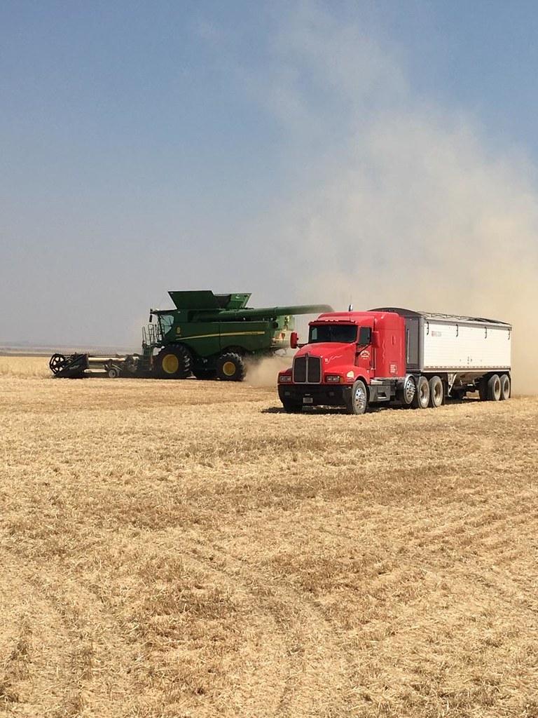 Schemper 2017 - Montana Wheat Harvest