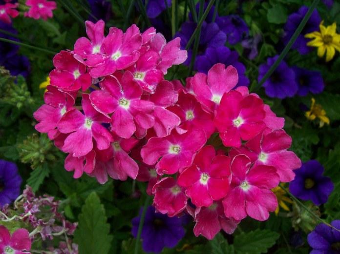 Basket o' flowers