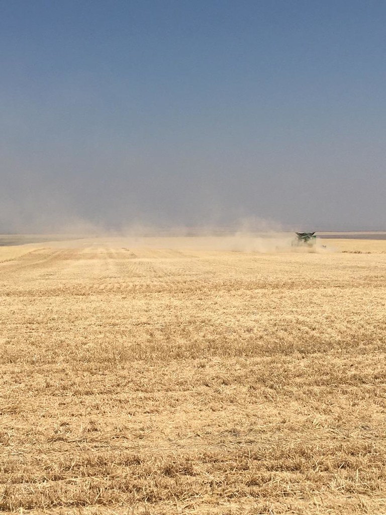 Schemper 2017 - Montana Wheat Harvest