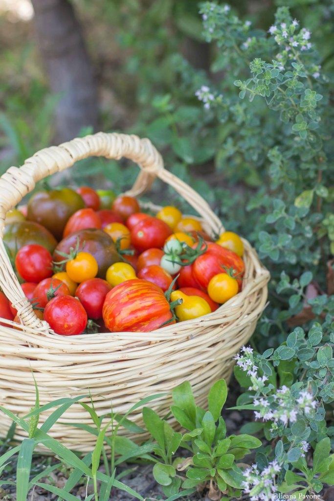 Pomodori_ orto