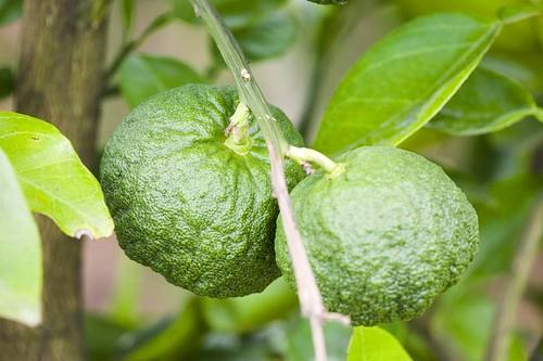 Sidra - vinagre de maçã - cidra
