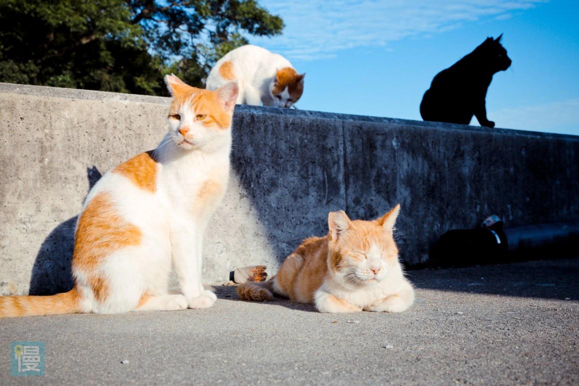 貓島男木島 瀨戶內海跳島旅行 貓貓