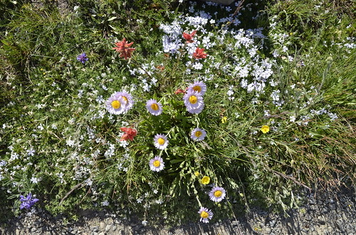 Manning Park wildflowers 3