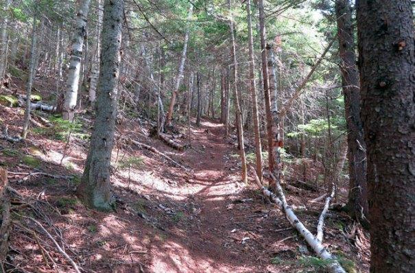 Saddleback Berry Picker's Trail Softwoods