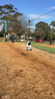 Melbourne Playgrounds - Macleay park