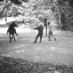 Campesinos Break a Mule.